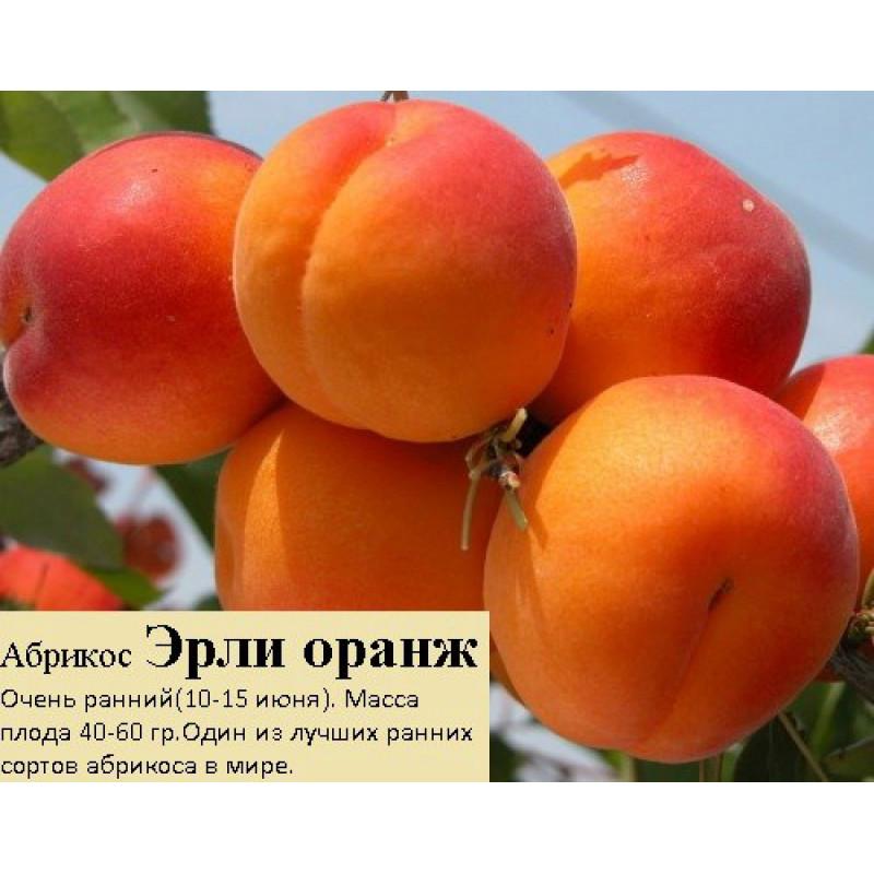 Эрли оранж