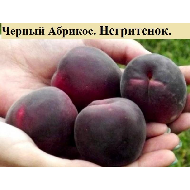 Чёрный абрикос Негритёнок