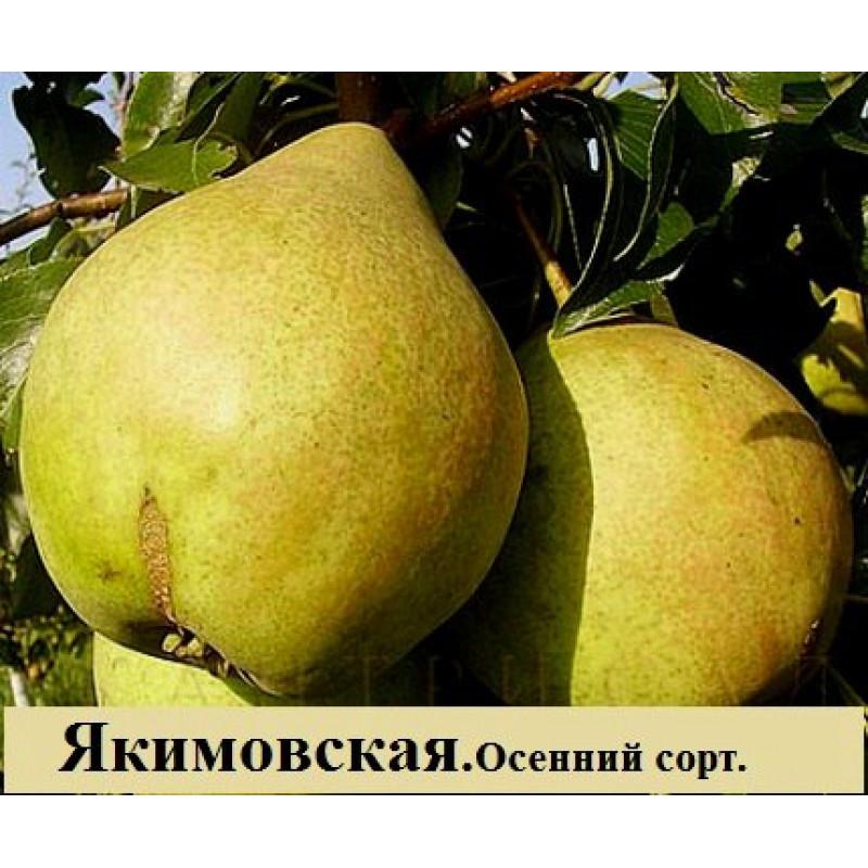 Якимовская