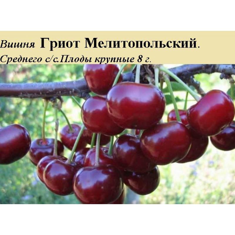 Грийот Мелитополя