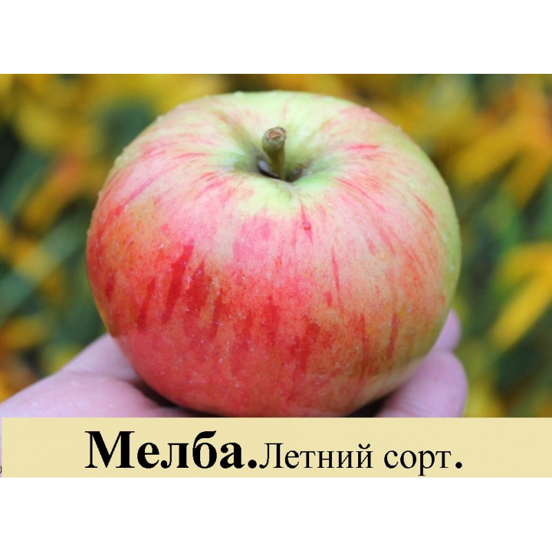Мелба